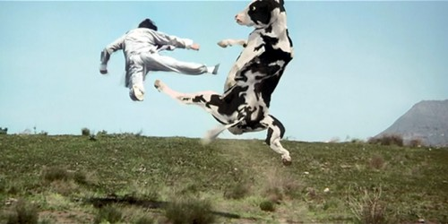 Fight-choreography-cow-fight-kung-pow
